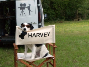 Sykes as Harvey